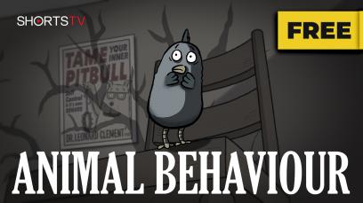 animal-behaviour-rated-g